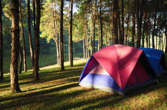 Camping. Site at lake side at sunrise stock images