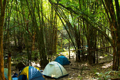 Camping in bamboo forest. Royalty Free Stock Image