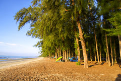 Camping on beach pine Royalty Free Stock Photos