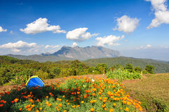 Camping in blooming flowers with mountain background. Royalty Free Stock Images