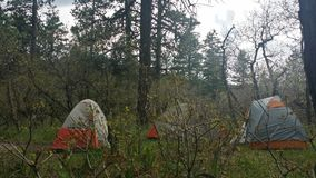 Camping. Tents in a forest stock photos