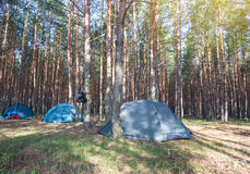 Camping in early morning. Sunny day near beautiful forest Stock Images