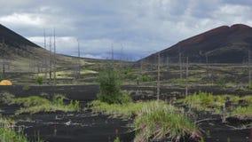 Camping en el helicóptero del estacionamiento en vídeo muerto de la cantidad de la acción del bosque metrajes