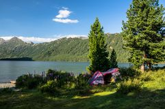 Camping et tente sous la forêt de pin Images stock