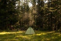 Camping et tente sous la forêt de pin Image libre de droits