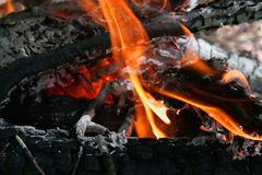 Camping fire. In the forest Stock Photography