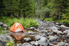 Camping in the Forest Stock Images