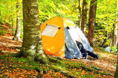Camping in a forest. Camping area with multi-colored tent in forest during autumn Royalty Free Stock Photos