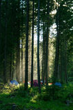 Camping in forest. Group of tents in a forest with afternoon light falling through trees Royalty Free Stock Image