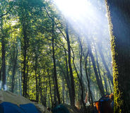 Camping in the forest in Carpathian mountains, Ukraine. Camping in the forest near to Lviv Royalty Free Stock Photo