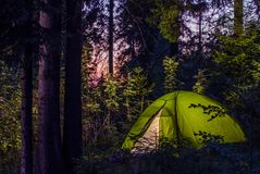 Camping in a Forest. Late Evening on a Camp Site. Green Illuminated Tent Between Spruce Trees. Outdoor Lifestyle Stock Photo