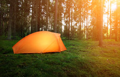 Camping in the Forest. And morning light stock photography