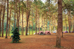 Camping in forest. Camping in pine forest and lake Royalty Free Stock Images