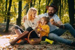 Camping with kids. Father mather and son camping. Parent teach baby. Dad mom and son playing together. Happy family. Eating apple in autumn park stock photos