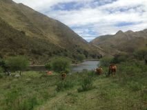 Camping in the Mountains in Capilla del Monte, Córdoba, Argentina at the Lake Los Alazanes. Campings next to cows and a lake in the Mountains in Capilla del royalty free stock photo