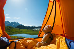 Camping in mountains. Teddy bear camping in mountains stock photo