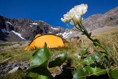 Camping in the mountains. Yellow tent in a camp at a mountain lake Stock Photos