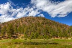 Camping nacional del prado del bosque-Lockett de AZ-Coconino Fotografía de archivo libre de regalías