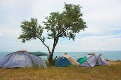 Camping near a tree on the beach Stock Photo