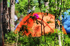 Camping outdoor with  tent in woods in summer Stock Photos