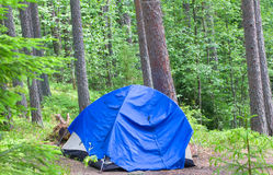Camping outdoor with  tent in woods in summer Stock Images