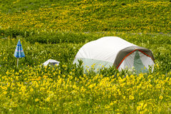 Camping Outdoors in the Mountains of Colorado. Colorful camping tent with blue umbrella sitting in mountain meadow of colorful wildflowers on sunny afternoon Royalty Free Stock Photo
