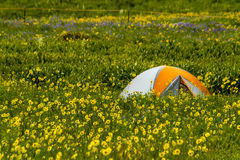 Camping Outdoors in the Mountains of Colorado. Colorful camping tent sitting in mountain meadow of colorful wildflowers on sunny afternoon Stock Image