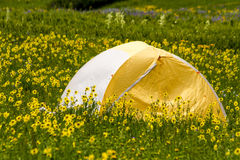 Camping Outdoors in the Mountains of Colorado. Colorful camping tent sitting in mountain meadow of colorful wildflowers on sunny afternoon Royalty Free Stock Images