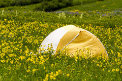 Camping Outdoors in the Mountains of Colorado. Colorful camping tent sitting in mountain meadow of colorful wildflowers on sunny afternoon Stock Photo