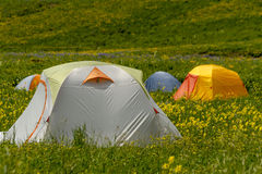 Camping Outdoors in the Mountains of Colorado. Colorful camping tents sitting in mountain meadow of colorful wildflowers on sunny afternoon Royalty Free Stock Photos
