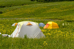 Camping Outdoors in the Mountains of Colorado. Colorful camping tents sitting in mountain meadow of colorful wildflowers on sunny afternoon Royalty Free Stock Photography