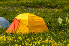 Camping Outdoors in the Mountains of Colorado. Colorful camping tents sitting in mountain meadow of colorful wildflowers on sunny afternoon Stock Photos
