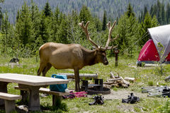 Camping Outdoors in the Mountains of Colorado Royalty Free Stock Photography