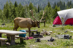 Camping Outdoors in the Mountains of Colorado Royalty Free Stock Photos