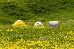 Camping Outdoors in the Mountains of Colorado. Three small camping tents sitting in mountain meadow of colorful wildflowers on sunny afternoon Stock Photo