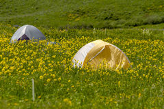 Camping Outdoors in the Mountains of Colorado. Two small camping tents sitting in mountain meadow of colorful wildflowers on sunny afternoon Royalty Free Stock Photo