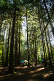 Camping in the pacfic north west Royalty Free Stock Photography