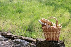 Camping. Picnic in nature. Picnic basket with wine fruit and other products in the thick green grass. Summer rest stock photo