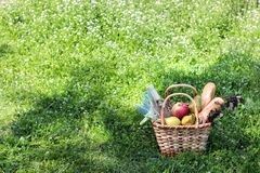 Camping. Picnic in nature. Picnic basket with wine fruit and other products in the thick green grass. Summer rest royalty free stock image