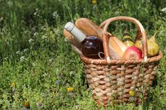 Camping. Picnic in nature. Picnic basket with wine fruit and other products in the thick green grass. Summer rest. Camping. Picnic in nature. Picnic basket with stock photo