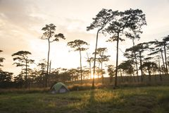 Camping with pine fores in sunset landscape. Tent and camping with pine fores in sunset landscape Stock Photography