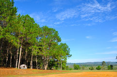 Camping in pine forest Stock Photos