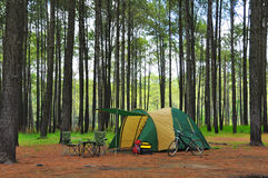 Camping in pine forest Stock Photo