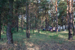 Camping at pine forest Stock Image