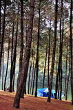 Camping in pine forest and reservior Stock Photo