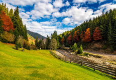 Camping place meadow near forest in mountains. Scene with wooden fence near calm river and few red foliage trees among spruce forest on hillside Royalty Free Stock Images
