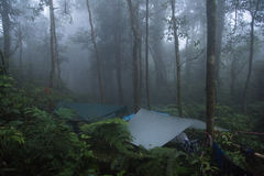 Camping in the rainforest with mist stock photos
