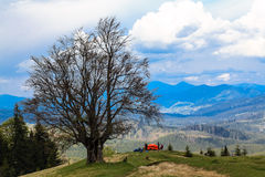 Camping in red tent under a tree on top of a mountain. Beautiful Royalty Free Stock Image