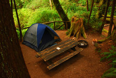 Camping in the Redwoods Stock Photography