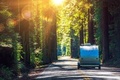 Camping in Redwoods. Travel Trailer RV on the Redwood Highway. California RVing. Camper on the Road Stock Image